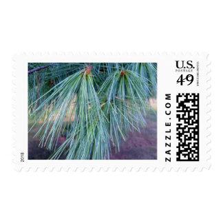 Pine Needles Postage