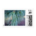 Pine Needles Postage Stamp