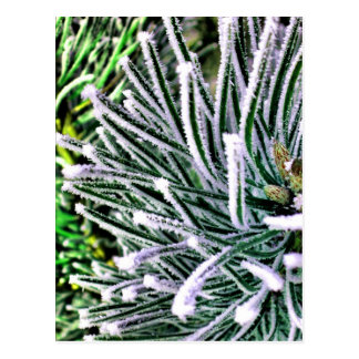pine needles postcard