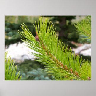 Pine Needles Posters