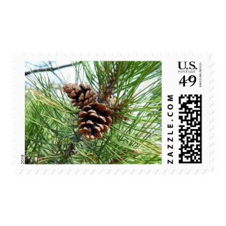 Pine Needles with Cones Postage