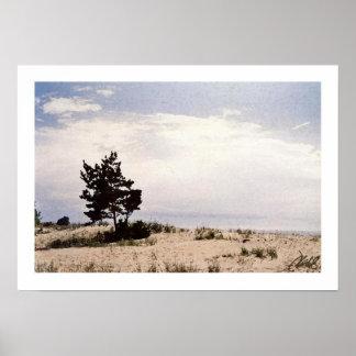 Pine on the Beach Print