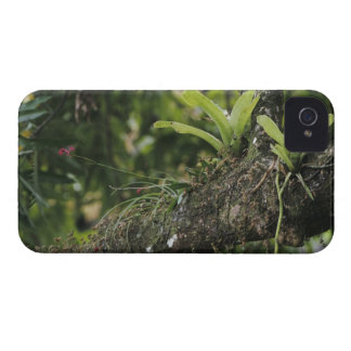 Pine Pink, Bletia purpurea, blooming on Mango Case-Mate iPhone 4 Case