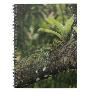 Pine Pink, Bletia purpurea, blooming on Mango Notebook