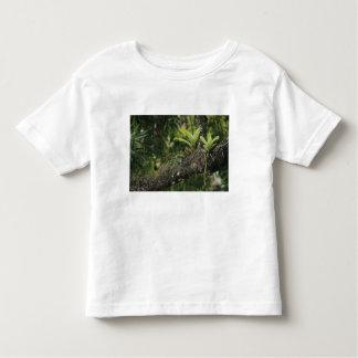 Pine Pink, Bletia purpurea, blooming on Mango T Shirts