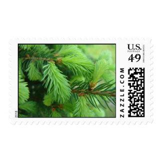 Pine Postage Stamp