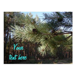 Pine Postcard