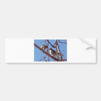 Pine Siskin Kiss Car Bumper Sticker