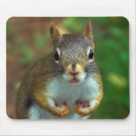 Pine Squirrel Mouse Pad