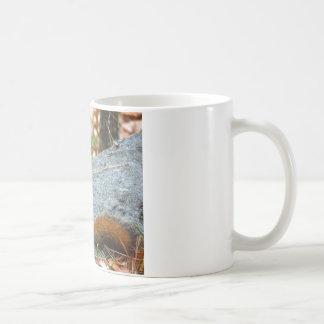 Pine Squirrel Mug