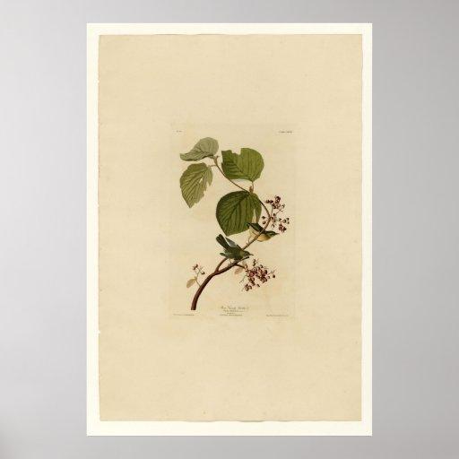 Pine Swamp Warbler Poster