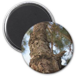 Pine Tree 2 Inch Round Magnet