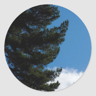 Pine Tree Agains The Blue Sky With Some Cloulds Sticker