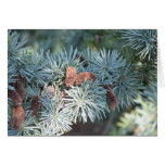 pine tree and cones greeting card