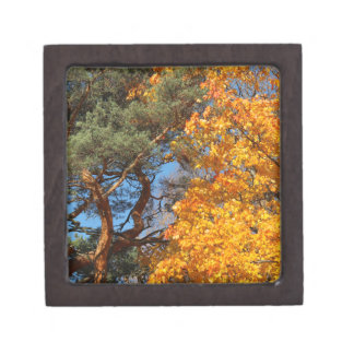 Pine tree and maple tree in the autumn jewelry box