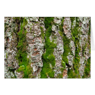 Pine Tree Bark With Moss Card