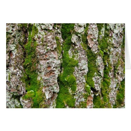 Pine Tree Bark With Moss Greeting Card