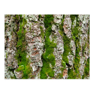 Pine Tree Bark With Moss Postcard
