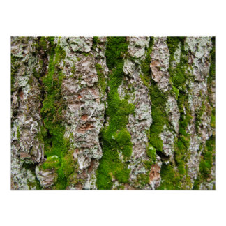 Pine Tree Bark With Moss Poster