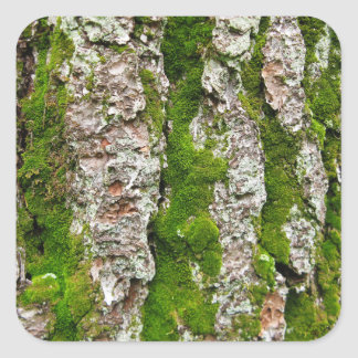 Pine Tree Bark With Moss Square Sticker