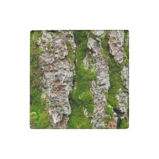 Pine Tree Bark With Moss Stone Magnet