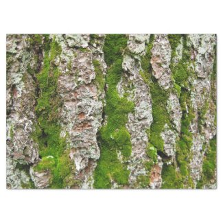 Pine Tree Bark With Moss Tissue Paper