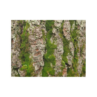 Pine Tree Bark With Moss Wood Poster