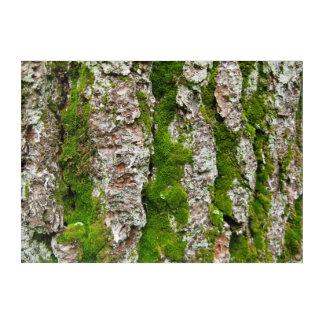 Pine Tree Bark With Stripes of Moss Wall Art