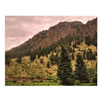 pine tree beauty postcard