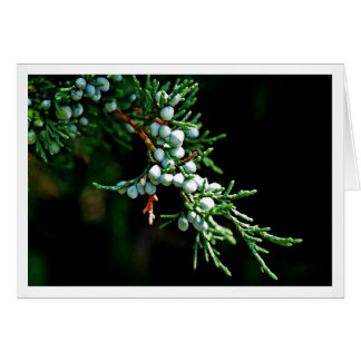 Pine Tree Branch Card