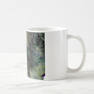 Pine tree branch dripping with resin coffee mug