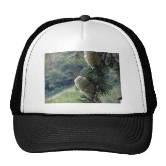 Pine tree branch dripping with resin trucker hat