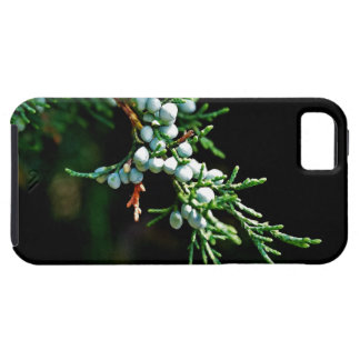 Pine Tree Branch iPhone SE/5/5s Case