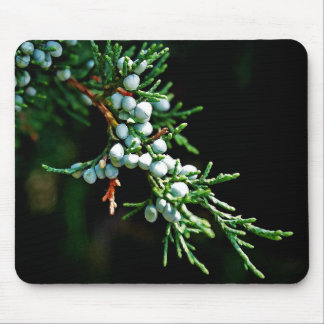 Pine Tree Branch Mouse Pad