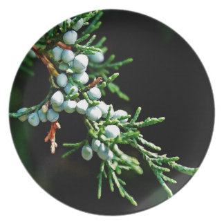 Pine Tree Branch Party Plate