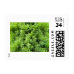 Pine tree branches postage stamp