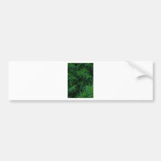 Pine Tree Bumper Sticker