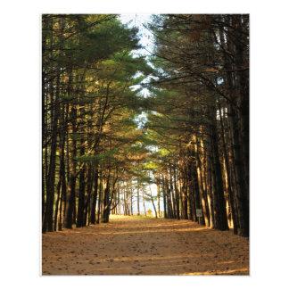 Pine Tree Drive Photo Print