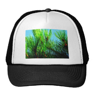 Pine Tree Cap