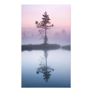 Pine tree in a mist at sunrise art photo