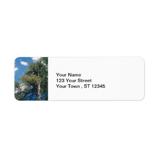 Pine Tree Labels