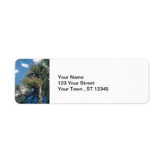 Pine Tree Label