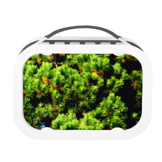 Pine Tree Yubo Lunch Boxes