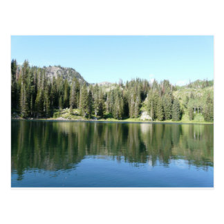 pine tree mirror on lake postcard