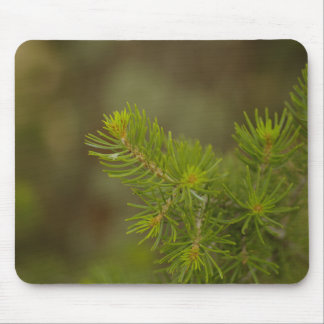 Pine Tree Mouse Pad