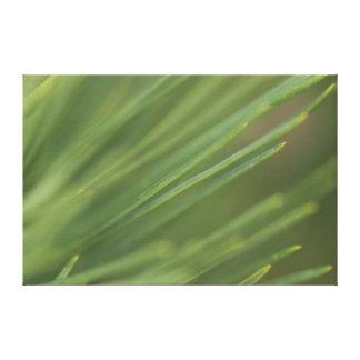 Pine Tree Needles Canvas Print