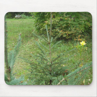 Pine Tree on Lawn Mouse Pad