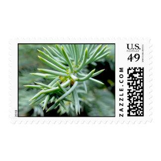 Pine Tree Postage