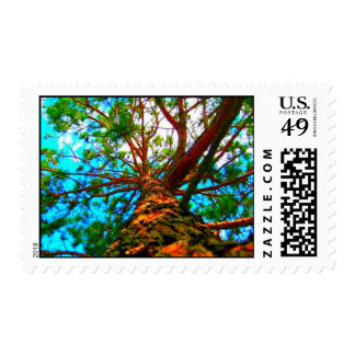 Pine Tree Stamps