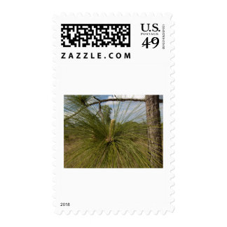 Pine Tree Postage Stamps